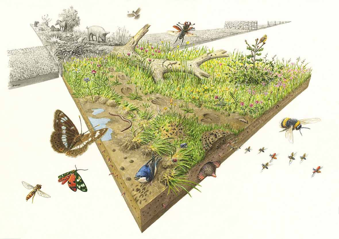 Countryside image showing earth, trees and animals
