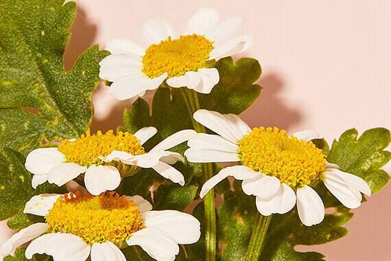 Eve Lom flowers
