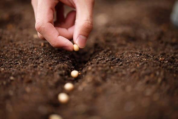 Seme e terra