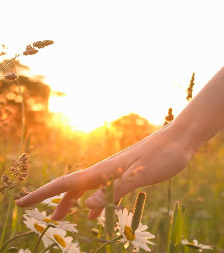 A woman's hand touching a flower in a field whilst the sun is setting behind her
