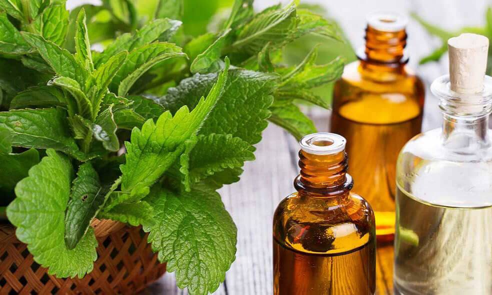 A peppermint plant in a brown pot next to bottles of peppermint oil