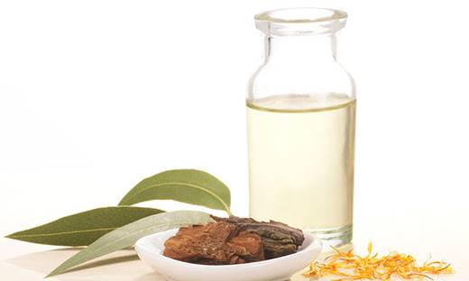 Willow Bark on a plate next to a bottle of oil