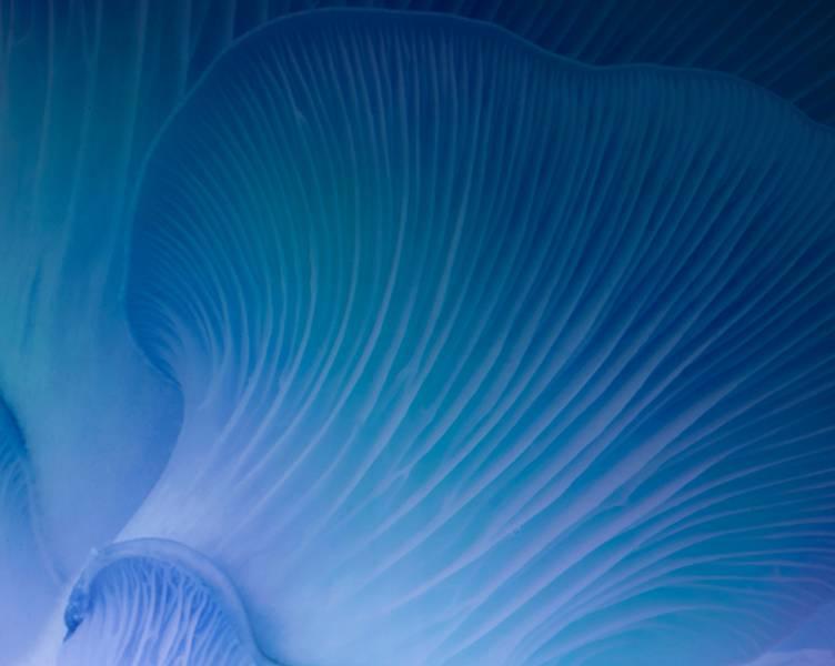 Meeresalgenkomplex