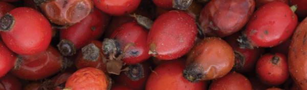 Ethically sourced and sustainable, our organic rosehips are the perfect ingredient for radiant skin.