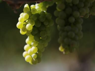 Le raisin et kiwi Vinanza®
