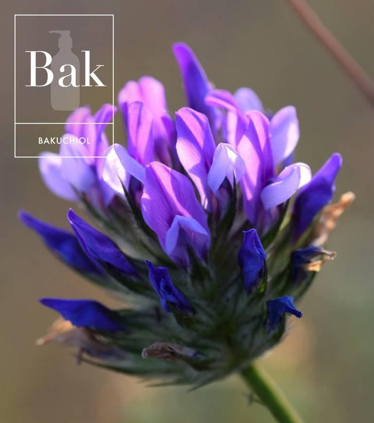 Bakuchiol