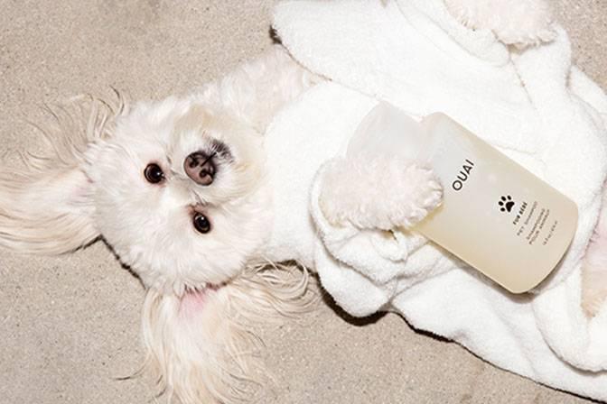 OUAI FURE BEBE pet shampoo