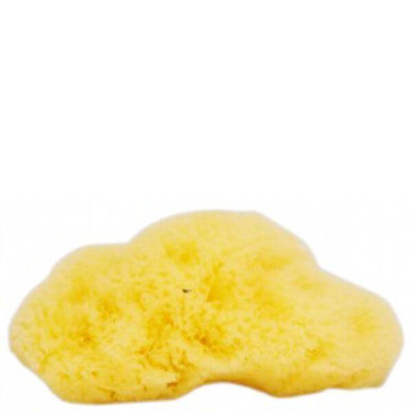 The Natural Sea Sponge Company – Fina Silk Sea Sponge (ca 7,5cm)