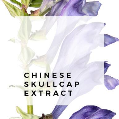 Chinese Skullcap Extract