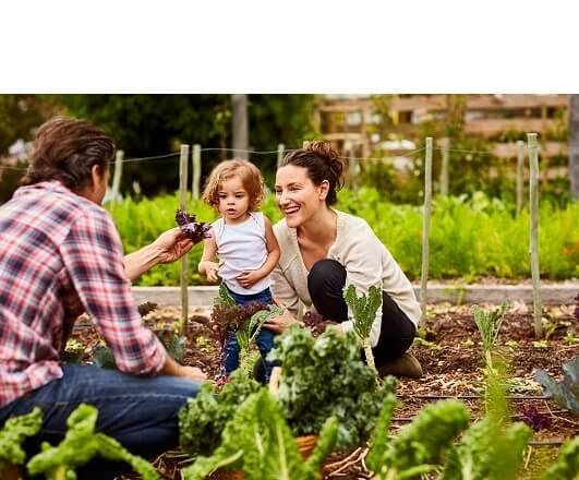 Our Commitment to Organic Purity