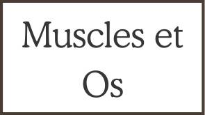 Muscles et Os