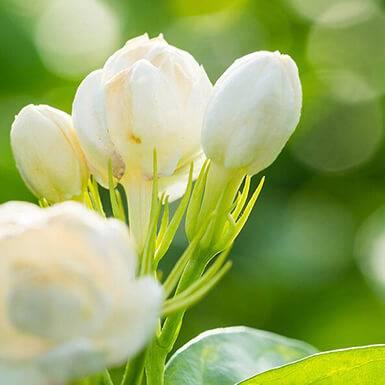 Über Blütenwachs