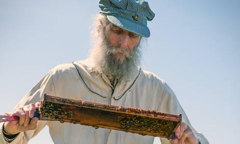 Burt looking at a beehive