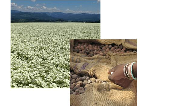 Image of a field full of flowers and a sack full of cocoa beans