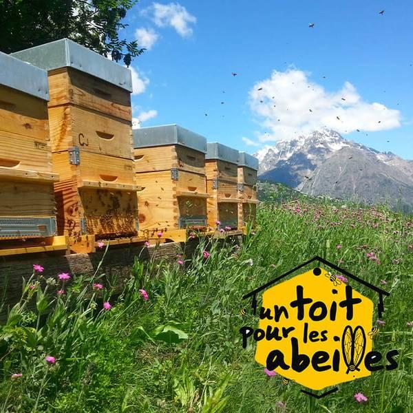 Participer à la sauvegarde des abeilles avec UN TOIT POUR LES ABEILLES