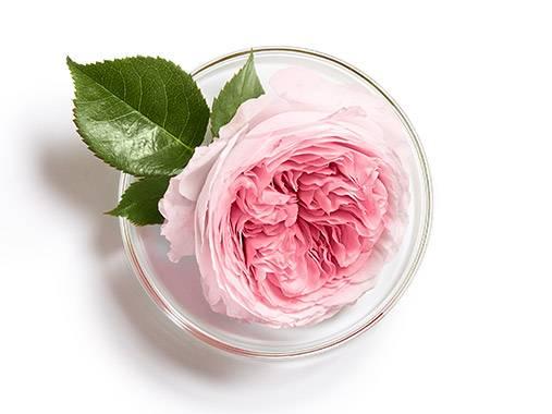 L'actif d'Orient source de douceur pour les peaux sensibles.