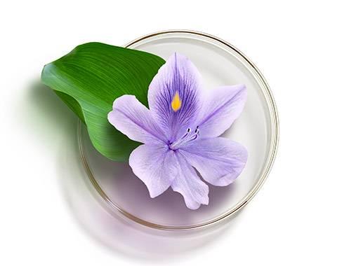 La plante anti-déshydratation venue des tropiques.