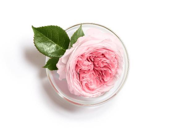 Damascena Rose. An active ingredient from the East, which brings softness to sensitive skin. Find out more