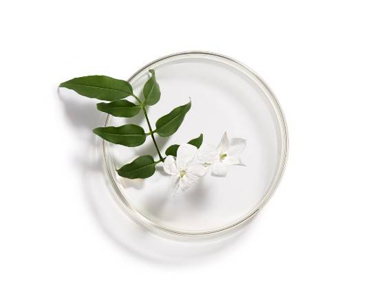 Jasmine. An active ingredient which boosts natural defenses. Find out more