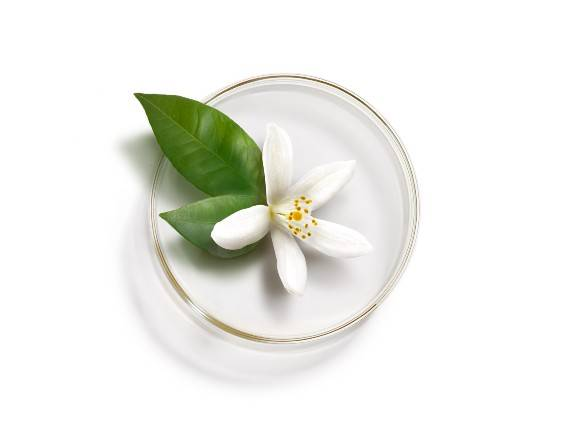 White Waterlily from Madagascar. The perfect ally for combination skin, with purifying properties. Find out more