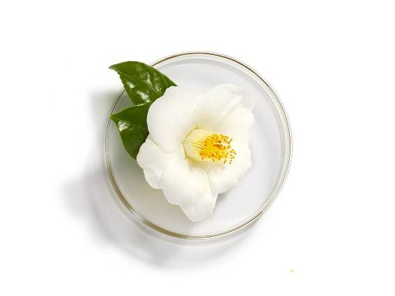 Camellia. An active ingredient with beneficial properties for the skin. Find out more