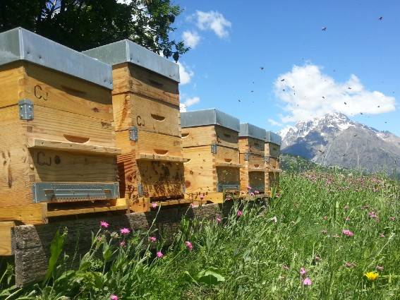 Beehives in the Vosages Mountains