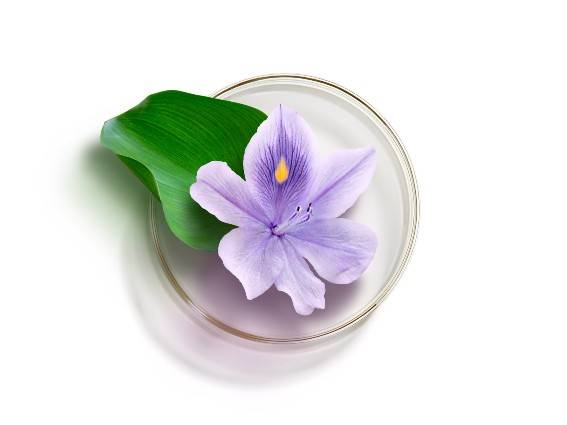 Water Hyacinth. The anti-dehydration plant from the tropics. Find out more.