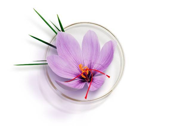 Saffron and Bougainvillea Bi-floral Cells®. Patented* technology with renewing power. Find out more
