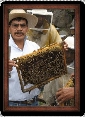 Honey ORIGIN: MEXICO