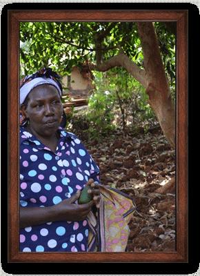 Organic avocado oil ORIGIN: KENYA