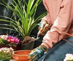Compost & Soil