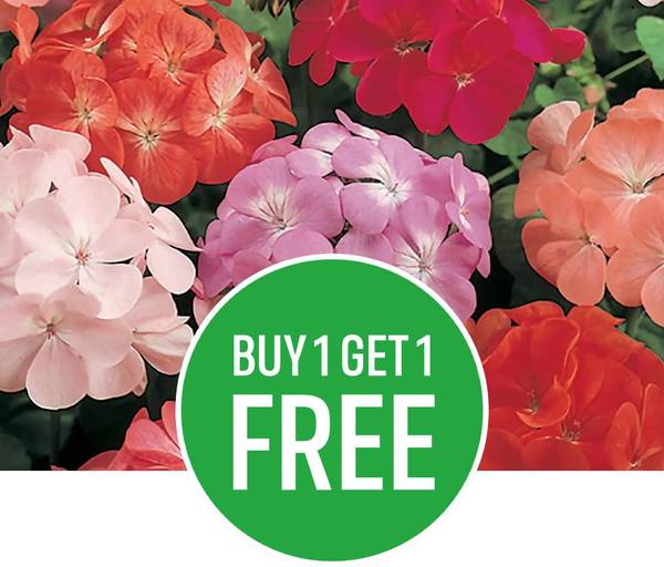 Buy One Get One Free on Packed Bedding Plants