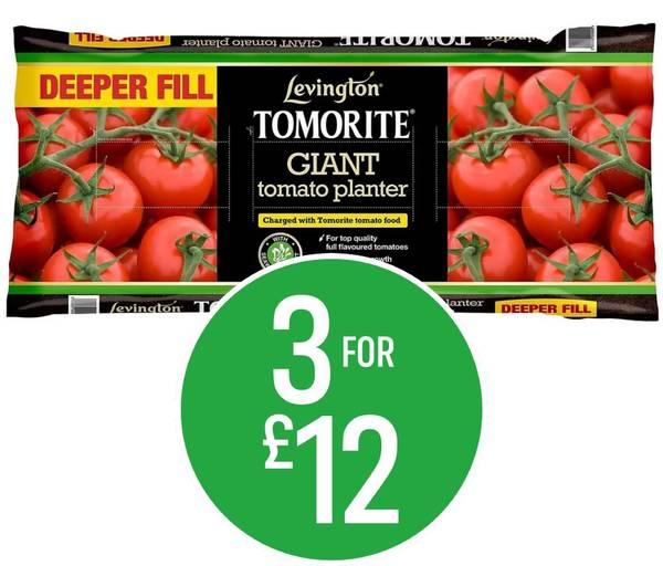 3 for £12 on Levington Tomorite Planter 52L