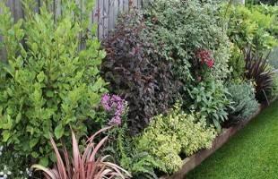 Plants, Seeds & Bulbs