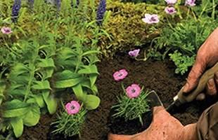 Compost, Soil & Bark Chippings