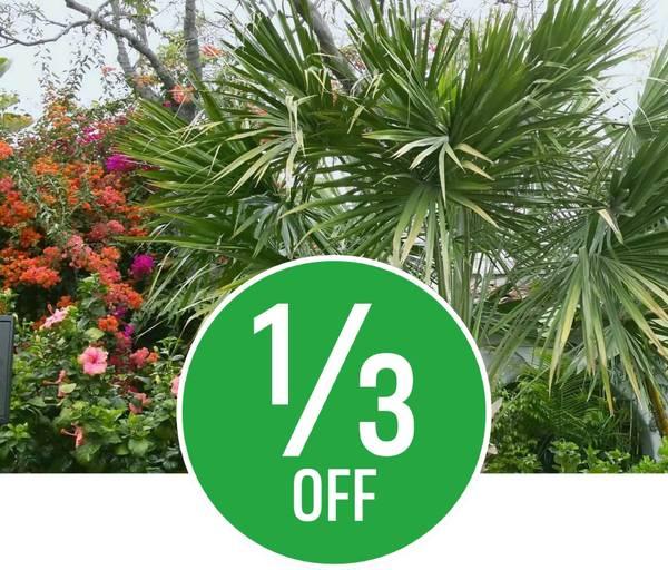 1/3 off Pot Bedding, Buxus & Outdoor Palms