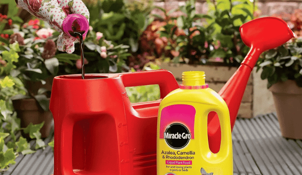 Lawn and Plant Care Deals