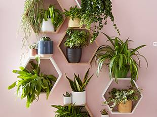Quirky shelving options for your houseplants