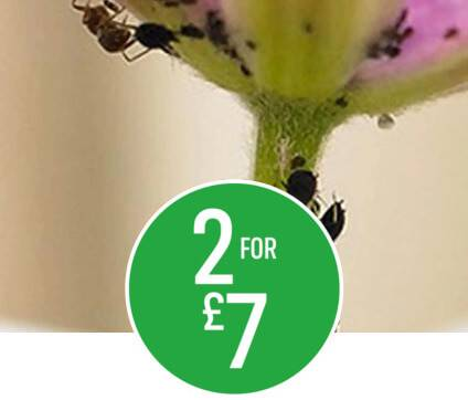 2 for £7 Selected Ecofective 1l