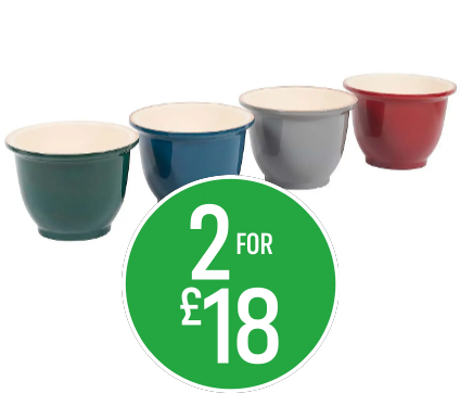 2 for £18 Guinevere 30cm Pot Asstd Colours