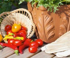 The best vegetables to grow in your garden