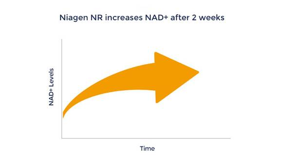 Graph to show how Niagen NR increases NAD+ after 2 weeks