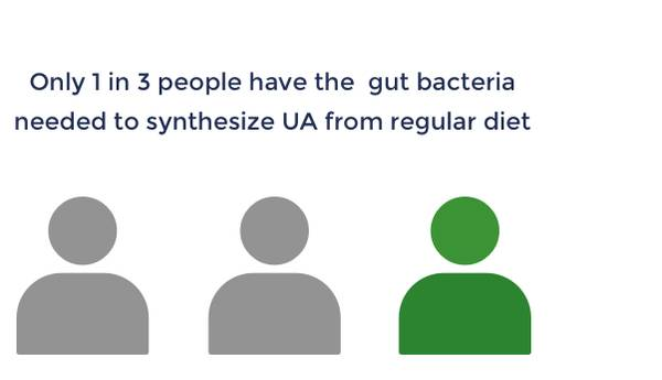 Only 1 in 3 people have the gut bacteria needed to synthesize UA from regular diet