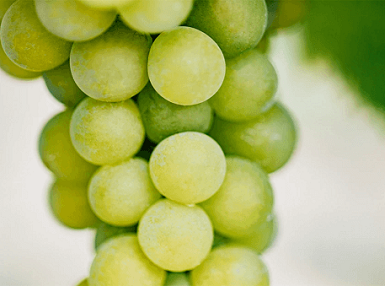 Vinanza<sup>®</sup> Grape