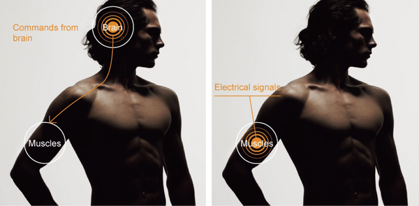 EMS Explained: Commands from brain to the muscle. Electrical signals in the muscle.