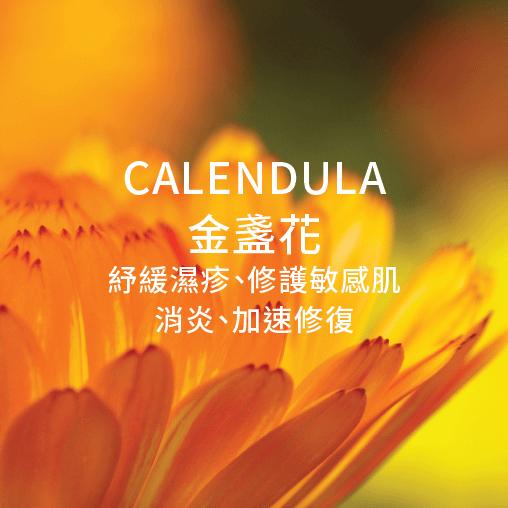 Calendula 金盞花 舒緩濕疹 修護敏感肌 消炎 加速修復
