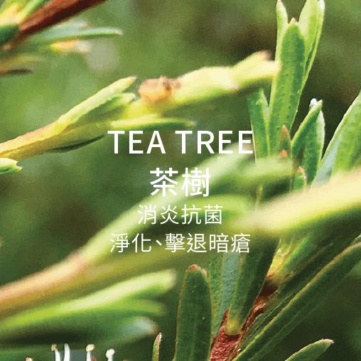 tea tree 茶樹 消炎抗菌 净化 擊退暗瘡