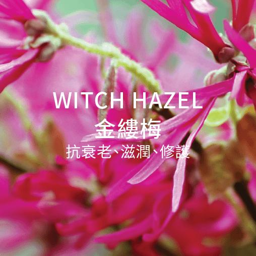witch hazel 金縷梅 抗衰老 滋潤 修護