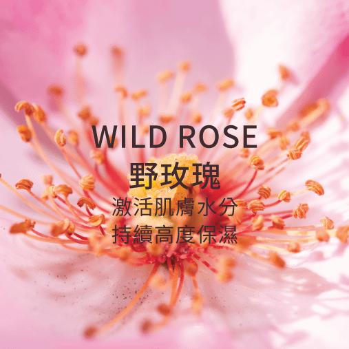 wild rose 野玫瑰 激活肌膚水分 持續高度保濕