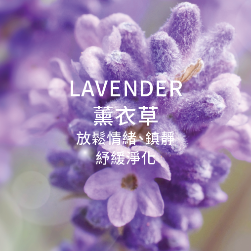 lavender 薰衣草 放鬆情緒 鎮靜 舒緩净化